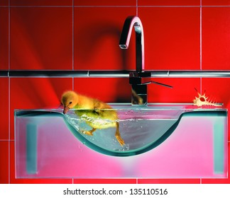 duckling swimming in clear water in a sink in a bathroom on a black background