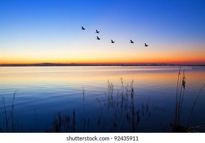 ducks crossing the lake