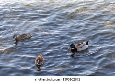 Ducks floating on a lake