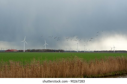 Ducks flying into deteriorating weather, Holland, Europe