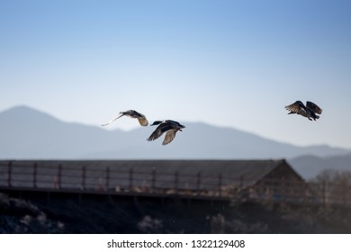 ducks flying up into the sky