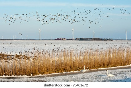 Ducks flying over a frozen canal in winter