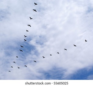 Ducks flying in a triangle formation