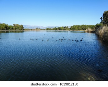 Ducks in the lake of Titreyengol. Side. Manavgat. Turkey