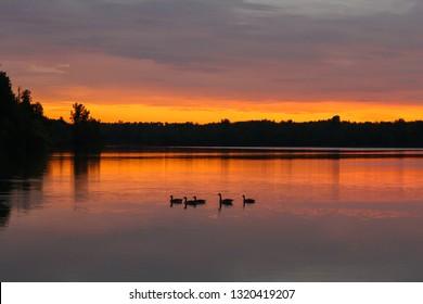 Ducks in a Michigan lake at sunset