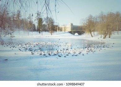 The ducks near the bridg