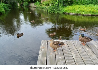 Ducks next to a pond