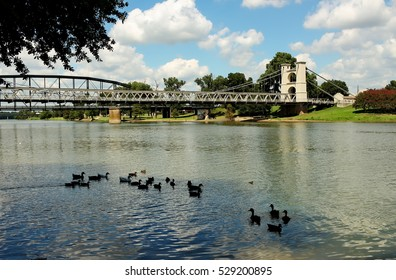 Ducks on the Brazos river in Waco Texas