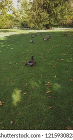 Ducks relaxing in a park