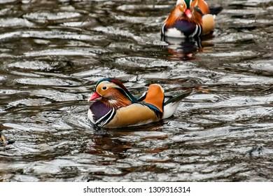 ducks swimming on a lake