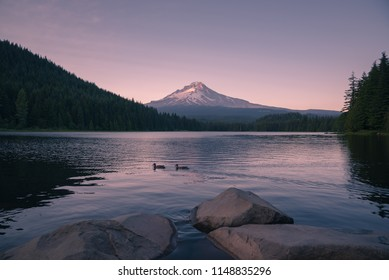 Ducks swimming under Mt Hood during sunset at Trillium Lake, Oregon