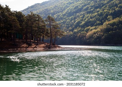 Ducks swimming in water with lake view. Borabay lakes in Amasya province