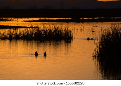 Ducks swimming in water at wetlands sunset silhouette