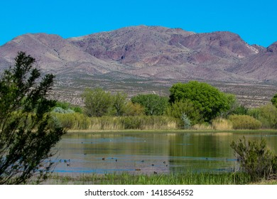 Ducks, wetlands, trees, and a mountain in Bosque del Apache National Wildlife Refuge