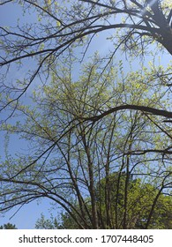 Dud trees in my backyard
