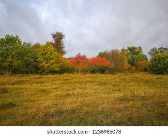 Dug up by moles meadow in front of colorful Indian summer forest against cloudy sky background