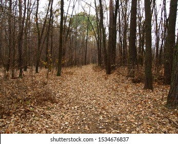Dull, bleak and deserted forest in late autumn. Fall forest road with bare trees and fallen foliage beneath them. Overcast season and weather in November and December. Forest on the eve of winter