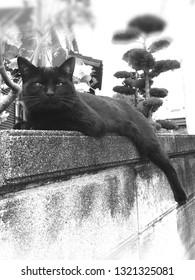 Dull face and slurping legs, Black cat