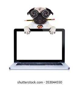 dumb pug dog with nerd glasses as boss,or office worker , isolated on white background behind laptop pc screen monitor