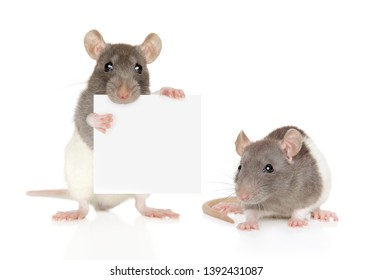 Dumbo Rats with small banner isolated on a white background.