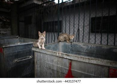 Dumpster Cats