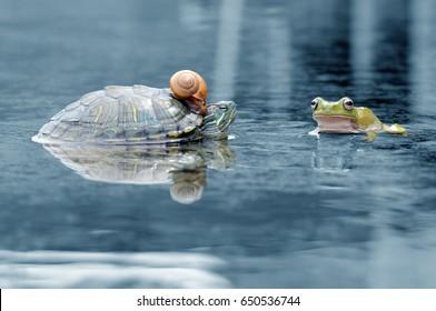 dumpy frog, frogs, tree frog, snails, turtles,