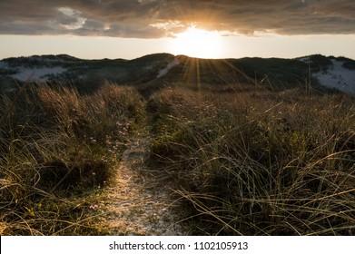 dune beach north sea denmark