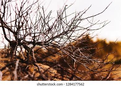 Dune bush walpaper
