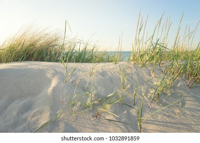 Dune grass by the sea