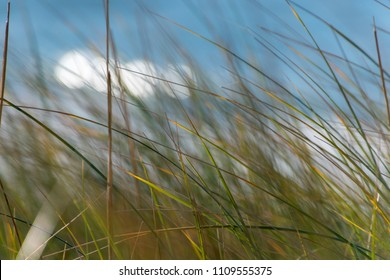 Dune grass coast blurred background
