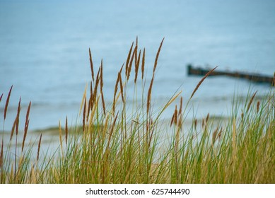 Dune grass in front of blurred eastern sea of Germany