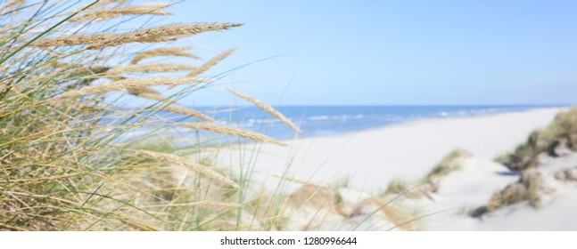 Dune grass and North sea beach