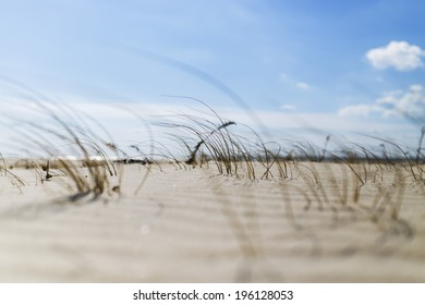 Dune Grass On Beach With Shallow Depth of Field