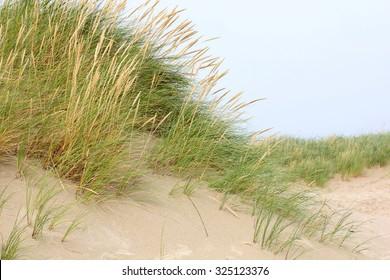 dune grass on the North Sea