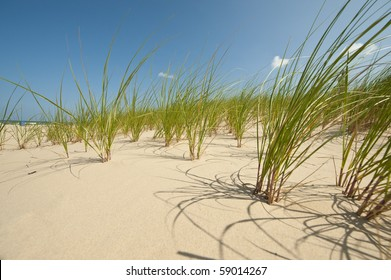 Dune Grass on Sandy Shore