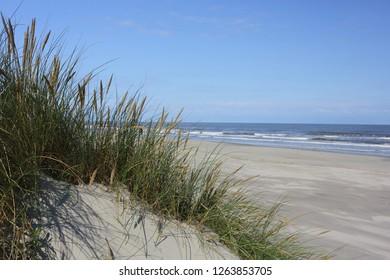 Dune grass and sand beach