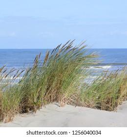 Dune grass, sunny day.