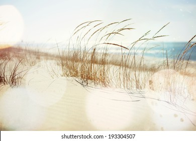 Dune Grasses on the beach