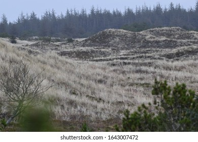 dune and heath landscape in Thy National Park, Denmark
