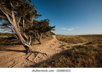 Dune of La Bergere in La Barre de Monts, France