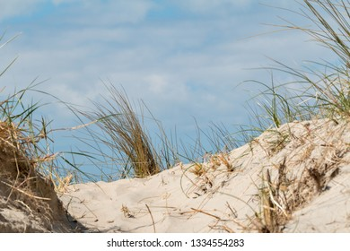 Dune landscape with dune grass and sand, on the North Sea coast
