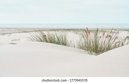 Dune landscape at the North Sea Beach