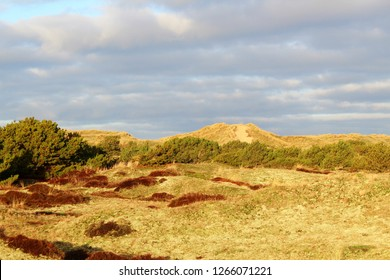 Dune landscape on the North Sea  island Fanoe, Denmark