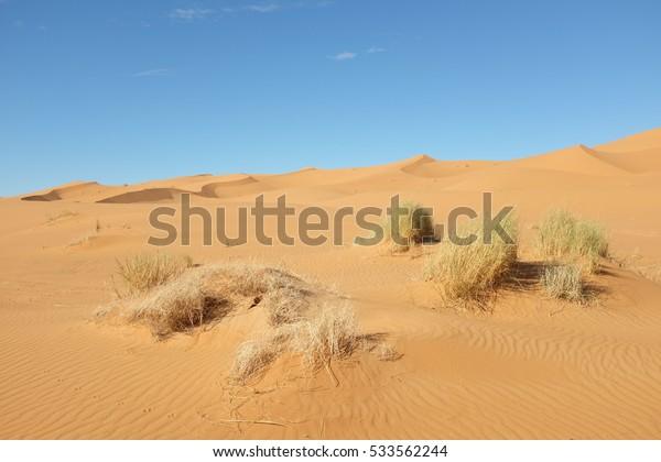 Dune Landscape of Sahara Desert near Merzouga in Morocco