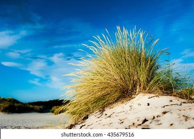 Dune with marram grass under a blue sky