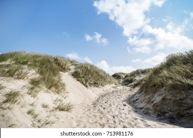 Dune on a beach with lyme grass in the summer in sunlight with blue sky