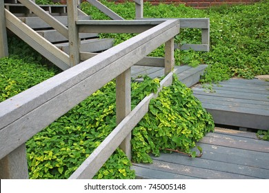 DUNE VEGETATION GROWING UNDER STEPS