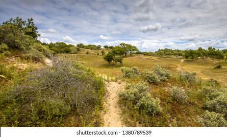 Dune vegetation landscape in Amsterdamse waterleidingduinen nature reserve