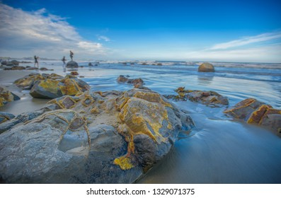 Dunedin , New Zealand, Feb 10th, 2019: Spheric Moeraki Boulders stone on the Koekohe beach, Landmark on the east coast of the South Island