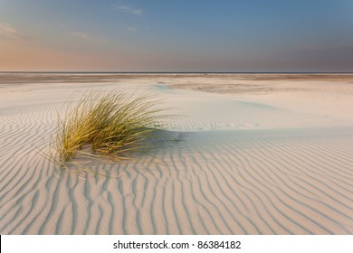 Dune-grass on the beach
